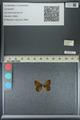 http://mczbase.mcz.harvard.edu/specimen_images/ent-lepidoptera/images/2013_04_26/IMG_142561.JPG