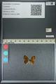 http://mczbase.mcz.harvard.edu/specimen_images/ent-lepidoptera/images/2013_04_26/IMG_142588.JPG