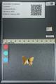 http://mczbase.mcz.harvard.edu/specimen_images/ent-lepidoptera/images/2013_04_26/IMG_142589.JPG