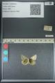 http://mczbase.mcz.harvard.edu/specimen_images/ent-lepidoptera/images/2013_04_26/IMG_142636.JPG