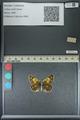 http://mczbase.mcz.harvard.edu/specimen_images/ent-lepidoptera/images/2013_04_26/IMG_142638.JPG