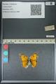 http://mczbase.mcz.harvard.edu/specimen_images/ent-lepidoptera/images/2013_04_26/IMG_142640.JPG