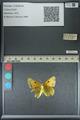 http://mczbase.mcz.harvard.edu/specimen_images/ent-lepidoptera/images/2013_04_26/IMG_142641.JPG