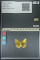 http://mczbase.mcz.harvard.edu/specimen_images/ent-lepidoptera/images/2013_04_26/IMG_142642.JPG