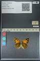 http://mczbase.mcz.harvard.edu/specimen_images/ent-lepidoptera/images/2013_04_26/IMG_142643.JPG