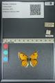 http://mczbase.mcz.harvard.edu/specimen_images/ent-lepidoptera/images/2013_04_26/IMG_142644.JPG
