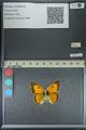 http://mczbase.mcz.harvard.edu/specimen_images/ent-lepidoptera/images/2013_04_26/IMG_142645.JPG