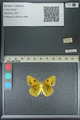 http://mczbase.mcz.harvard.edu/specimen_images/ent-lepidoptera/images/2013_04_26/IMG_142646.JPG