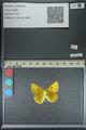 http://mczbase.mcz.harvard.edu/specimen_images/ent-lepidoptera/images/2013_04_26/IMG_142648.JPG