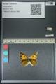 http://mczbase.mcz.harvard.edu/specimen_images/ent-lepidoptera/images/2013_04_26/IMG_142649.JPG