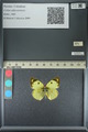 http://mczbase.mcz.harvard.edu/specimen_images/ent-lepidoptera/images/2013_05_17/IMG_142981.JPG