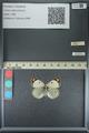 http://mczbase.mcz.harvard.edu/specimen_images/ent-lepidoptera/images/2013_05_17/IMG_142982.JPG