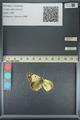 http://mczbase.mcz.harvard.edu/specimen_images/ent-lepidoptera/images/2013_05_17/IMG_142984.JPG