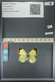 http://mczbase.mcz.harvard.edu/specimen_images/ent-lepidoptera/images/2013_05_21/IMG_143004.JPG