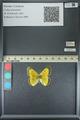 http://mczbase.mcz.harvard.edu/specimen_images/ent-lepidoptera/images/2013_05_21/IMG_143037.JPG