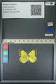http://mczbase.mcz.harvard.edu/specimen_images/ent-lepidoptera/images/2013_05_21/IMG_143038.JPG