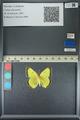 http://mczbase.mcz.harvard.edu/specimen_images/ent-lepidoptera/images/2013_05_21/IMG_143039.JPG