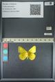 http://mczbase.mcz.harvard.edu/specimen_images/ent-lepidoptera/images/2013_05_21/IMG_143041.JPG