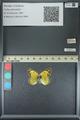 http://mczbase.mcz.harvard.edu/specimen_images/ent-lepidoptera/images/2013_05_21/IMG_143042.JPG