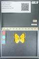 http://mczbase.mcz.harvard.edu/specimen_images/ent-lepidoptera/images/2013_05_21/IMG_143044.JPG