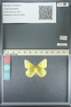 http://mczbase.mcz.harvard.edu/specimen_images/ent-lepidoptera/images/2013_05_21/IMG_143045.JPG