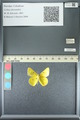 http://mczbase.mcz.harvard.edu/specimen_images/ent-lepidoptera/images/2013_05_21/IMG_143047.JPG