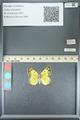 http://mczbase.mcz.harvard.edu/specimen_images/ent-lepidoptera/images/2013_05_21/IMG_143048.JPG