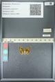 http://mczbase.mcz.harvard.edu/specimen_images/ent-lepidoptera/images/2013_05_22/IMG_143098.JPG