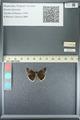 http://mczbase.mcz.harvard.edu/specimen_images/ent-lepidoptera/images/2013_05_22/IMG_143100.JPG