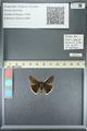 http://mczbase.mcz.harvard.edu/specimen_images/ent-lepidoptera/images/2013_05_22/IMG_143101.JPG