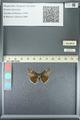 http://mczbase.mcz.harvard.edu/specimen_images/ent-lepidoptera/images/2013_05_22/IMG_143102.JPG