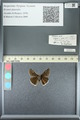 http://mczbase.mcz.harvard.edu/specimen_images/ent-lepidoptera/images/2013_05_22/IMG_143103.JPG