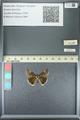 http://mczbase.mcz.harvard.edu/specimen_images/ent-lepidoptera/images/2013_05_22/IMG_143104.JPG