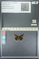http://mczbase.mcz.harvard.edu/specimen_images/ent-lepidoptera/images/2013_05_22/IMG_143105.JPG