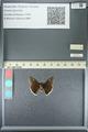 http://mczbase.mcz.harvard.edu/specimen_images/ent-lepidoptera/images/2013_05_22/IMG_143106.JPG