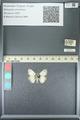 http://mczbase.mcz.harvard.edu/specimen_images/ent-lepidoptera/images/2013_05_22/IMG_143107.JPG