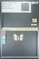 http://mczbase.mcz.harvard.edu/specimen_images/ent-lepidoptera/images/2013_05_22/IMG_143108.JPG