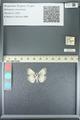 http://mczbase.mcz.harvard.edu/specimen_images/ent-lepidoptera/images/2013_05_22/IMG_143109.JPG