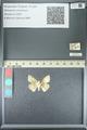 http://mczbase.mcz.harvard.edu/specimen_images/ent-lepidoptera/images/2013_05_22/IMG_143110.JPG