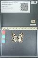 http://mczbase.mcz.harvard.edu/specimen_images/ent-lepidoptera/images/2013_05_22/IMG_143112.JPG