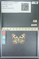http://mczbase.mcz.harvard.edu/specimen_images/ent-lepidoptera/images/2013_05_22/IMG_143113.JPG