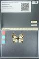 http://mczbase.mcz.harvard.edu/specimen_images/ent-lepidoptera/images/2013_05_22/IMG_143114.JPG