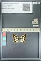 http://mczbase.mcz.harvard.edu/specimen_images/ent-lepidoptera/images/2013_05_22/IMG_143115.JPG
