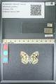 http://mczbase.mcz.harvard.edu/specimen_images/ent-lepidoptera/images/2013_05_22/IMG_143116.JPG