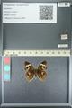 http://mczbase.mcz.harvard.edu/specimen_images/ent-lepidoptera/images/2013_05_22/IMG_143117.JPG