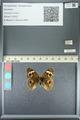 http://mczbase.mcz.harvard.edu/specimen_images/ent-lepidoptera/images/2013_05_22/IMG_143118.JPG