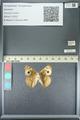 http://mczbase.mcz.harvard.edu/specimen_images/ent-lepidoptera/images/2013_05_22/IMG_143120.JPG