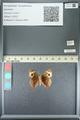 http://mczbase.mcz.harvard.edu/specimen_images/ent-lepidoptera/images/2013_05_22/IMG_143121.JPG