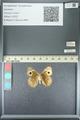 http://mczbase.mcz.harvard.edu/specimen_images/ent-lepidoptera/images/2013_05_22/IMG_143122.JPG