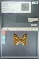 http://mczbase.mcz.harvard.edu/specimen_images/ent-lepidoptera/images/2013_05_22/IMG_143125.JPG